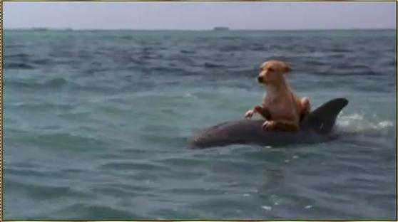 Dolphin and Dog - Let as be Friends